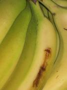 Got Banana?